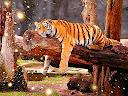 tigre preguiçoso