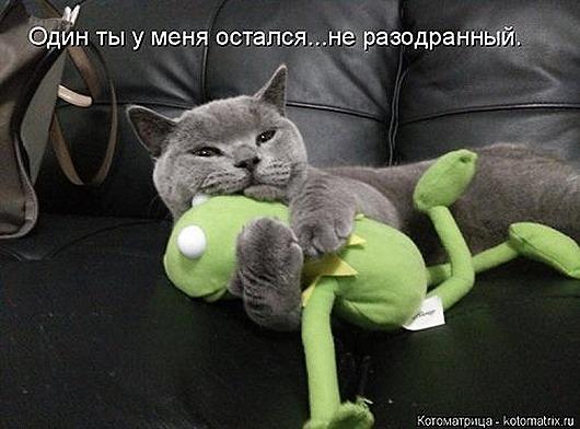 1423819054_kotomatricy-5