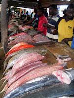Fish Market - Maputo, Mozambique