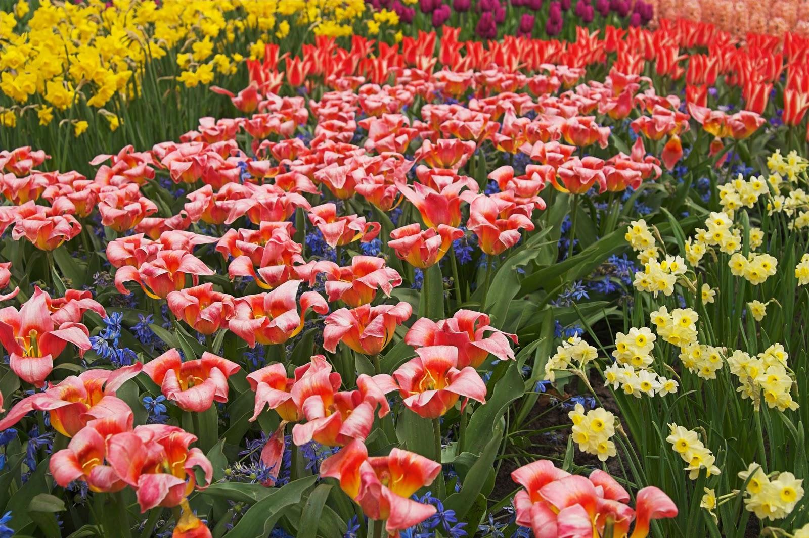 Cooperativa san isidro de segorbe jardines listos para la for Jardines de primavera