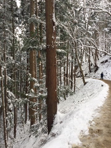 The 1.6km walk to the snow monkey park in Nagano. It was lovely, but be sure to wear waterproof shoes!