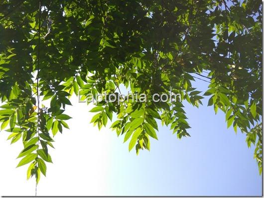 Hasil Foto Xiaomi Redmi Note 3