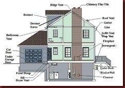 Common Squirrel Entry Points in Your Home