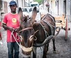 "Migrant touring the city with a donkey to collect the trash to recycle. On the cart it's written ""Riace gathers and doesn't refuse'"