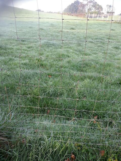 hierba tras la helada nocturna