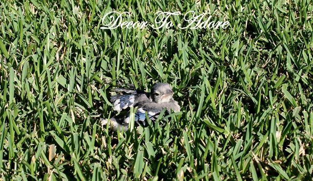 baby bird 010