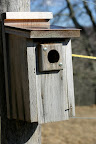 Will bluebirds or tree swallows get here first?