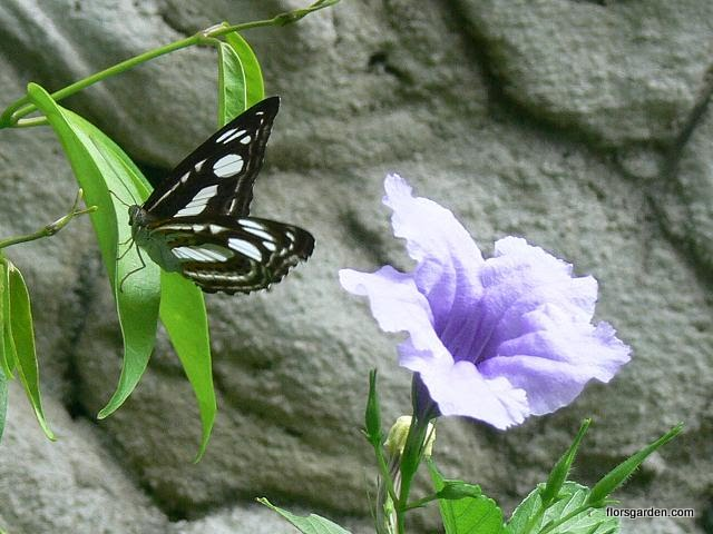 Birds & Butterflies - butterfly.flower.JPG