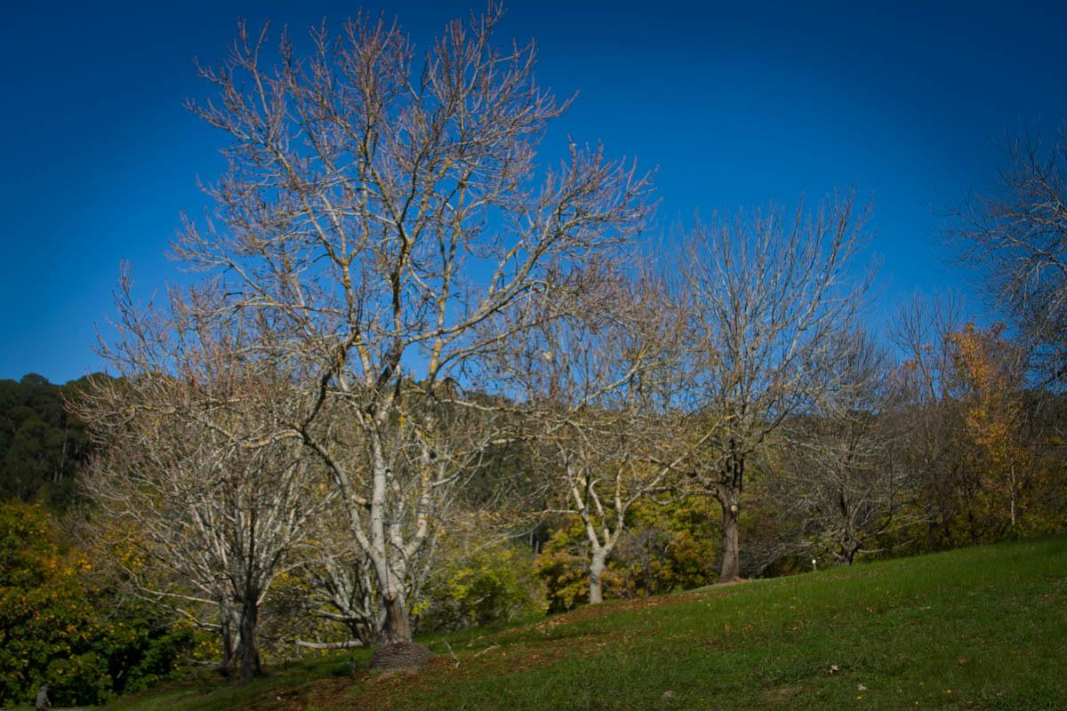 2011 04 25 Mt Lofty Botanic Garden - IMG_6546.jpg