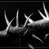 Makroaufnahmen aus der Natur