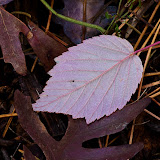 leaf_MG_2271-copy.jpg