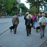 KNON-honden in Emmen - DSC_0815.JPG