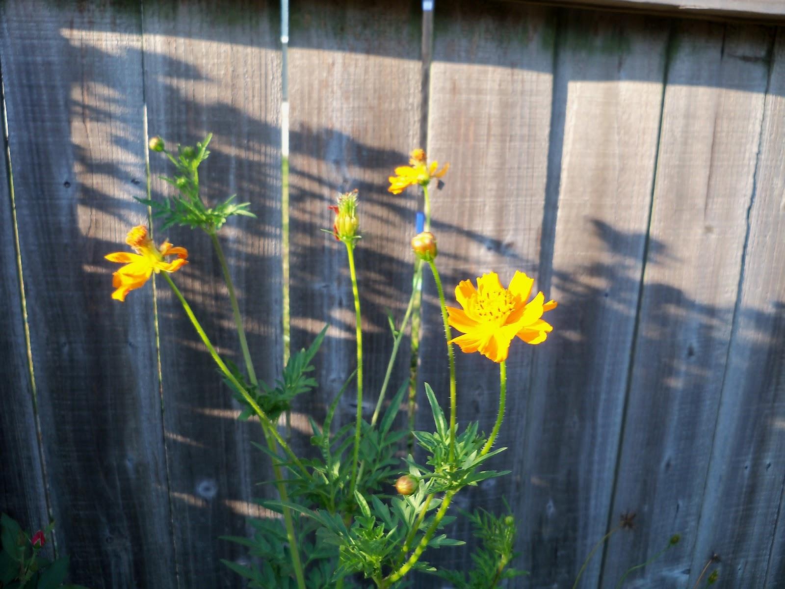 Gardening 2011 - 100_9229.JPG