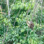 Some ornithology