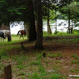 2013-06-18 - DSC_0439.JPG