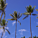 06-17-13 Travel to Oahu - IMGP6858.JPG