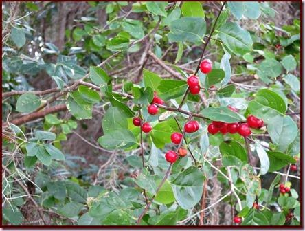 berriesIMG_8546[4]
