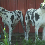 Our Sweet Gretta & Grandpa Gunther