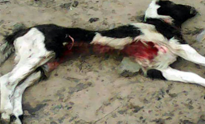 Fear as goats die mysteriously in Delta community