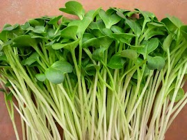 Rau mầm cải italia