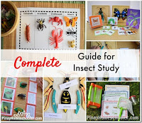 Complete Guide to Insect Study for Grade-Schoolers