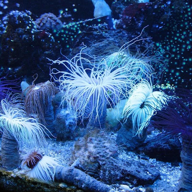 Aquarium_04.JPG
