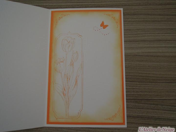 023 - Tulipes