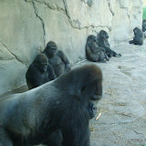 Pittsburgh Zoo Revisited - DSC05190.JPG