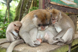 "Monkey familiy after watching all three parts of ""The Lord of the Rings"" ;) (© 2010 Bernd Neeser)"