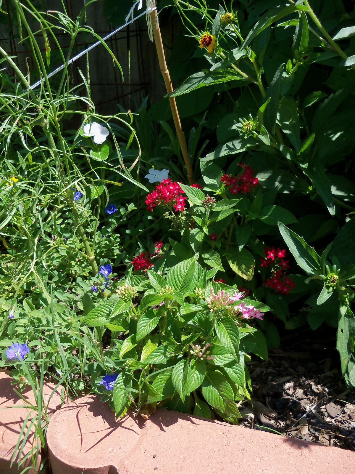 Gardening 2010, Part Three - 101_4420.JPG