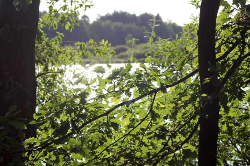 On Tour am Obersee bei Eschenbach: 21. Juli 2015 - Eschenbach%2B%25287%2529.jpg