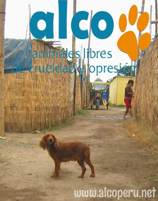 Asistencia Hualcara Cañete terremoto 2007 (15)