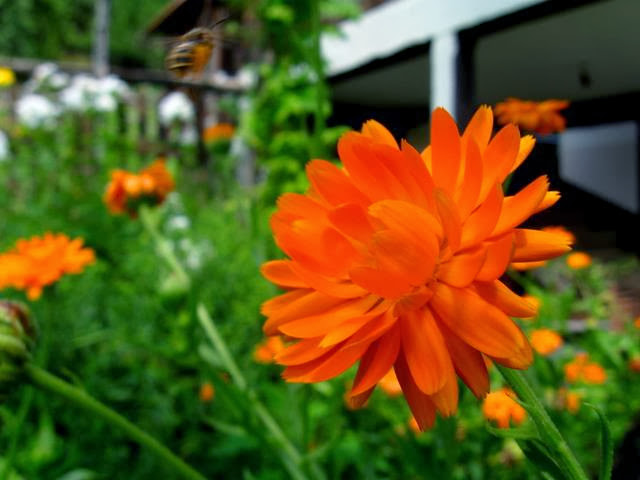 Konkurs za najbolju studentsku fotografiju 2011 - Ilija%2BResimic%2B2.JPG