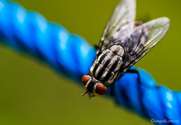 Macro photogrpahy of a fly