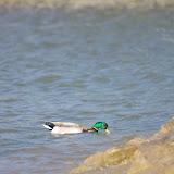 04-27-12 Rockwall Harbor - IMGP0668.JPG