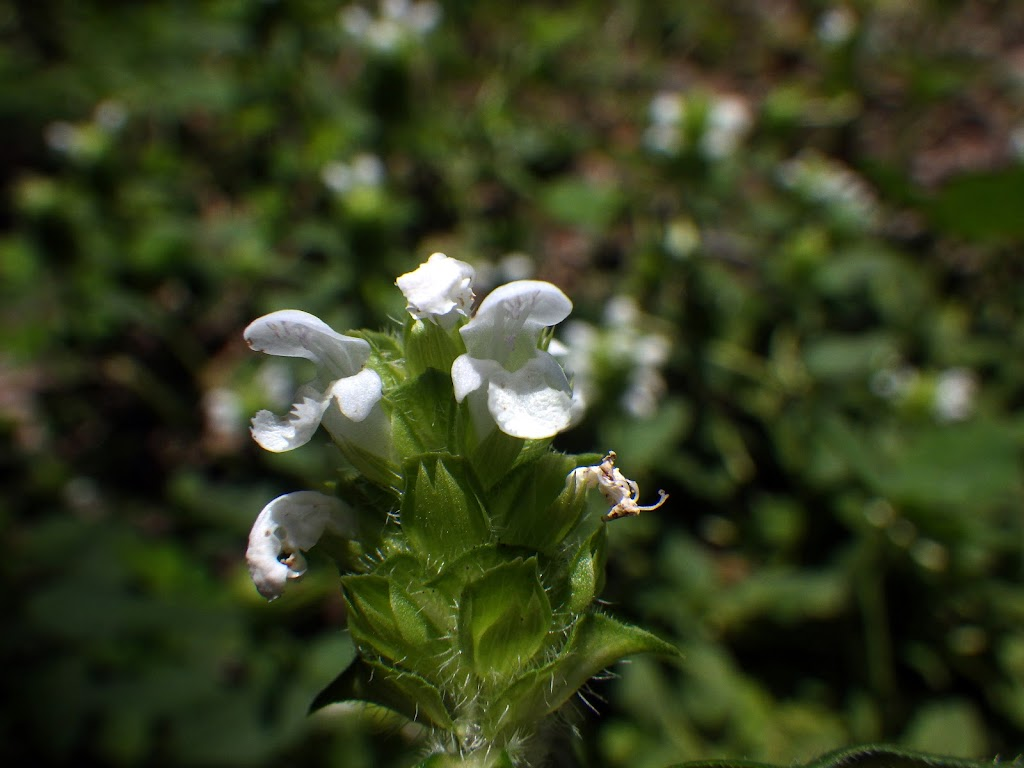 花の写真1
