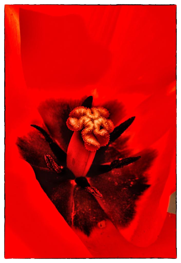 """Look Close"" by Celene Wendt"