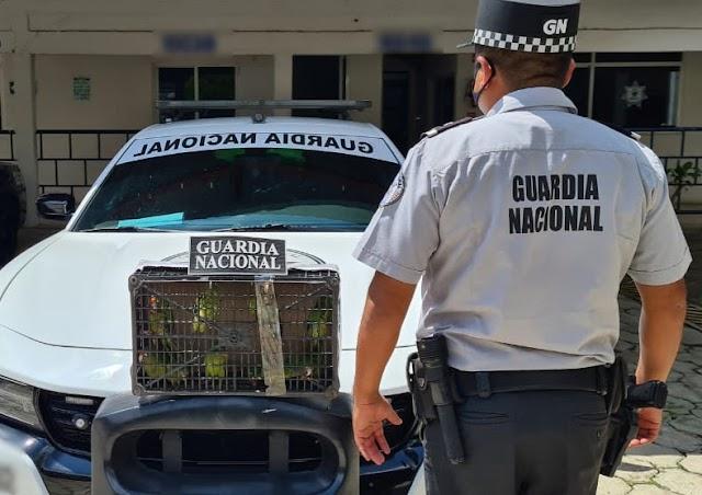 EN ACCIONES DE SEGURIDAD EN OAXACA, GUARDIA NACIONAL RESCATA A 13 PERICOS ATOLEROS SUJETOS A PROTECCIÓN ESPECIAL