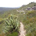 Lockleys Pylon Track below The Pinnacles (12745)