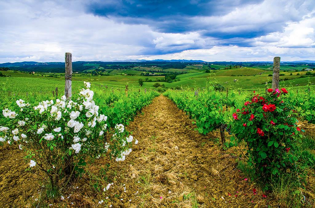 義大利 托斯卡尼 Italy Tuscany