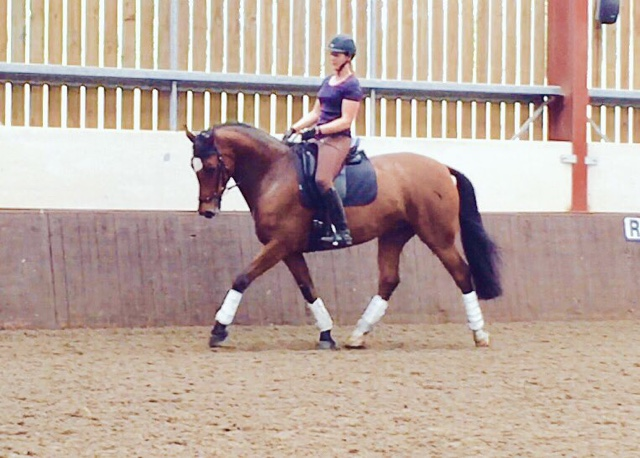 Haynet Blog of the Day: Not Your Average Mare
