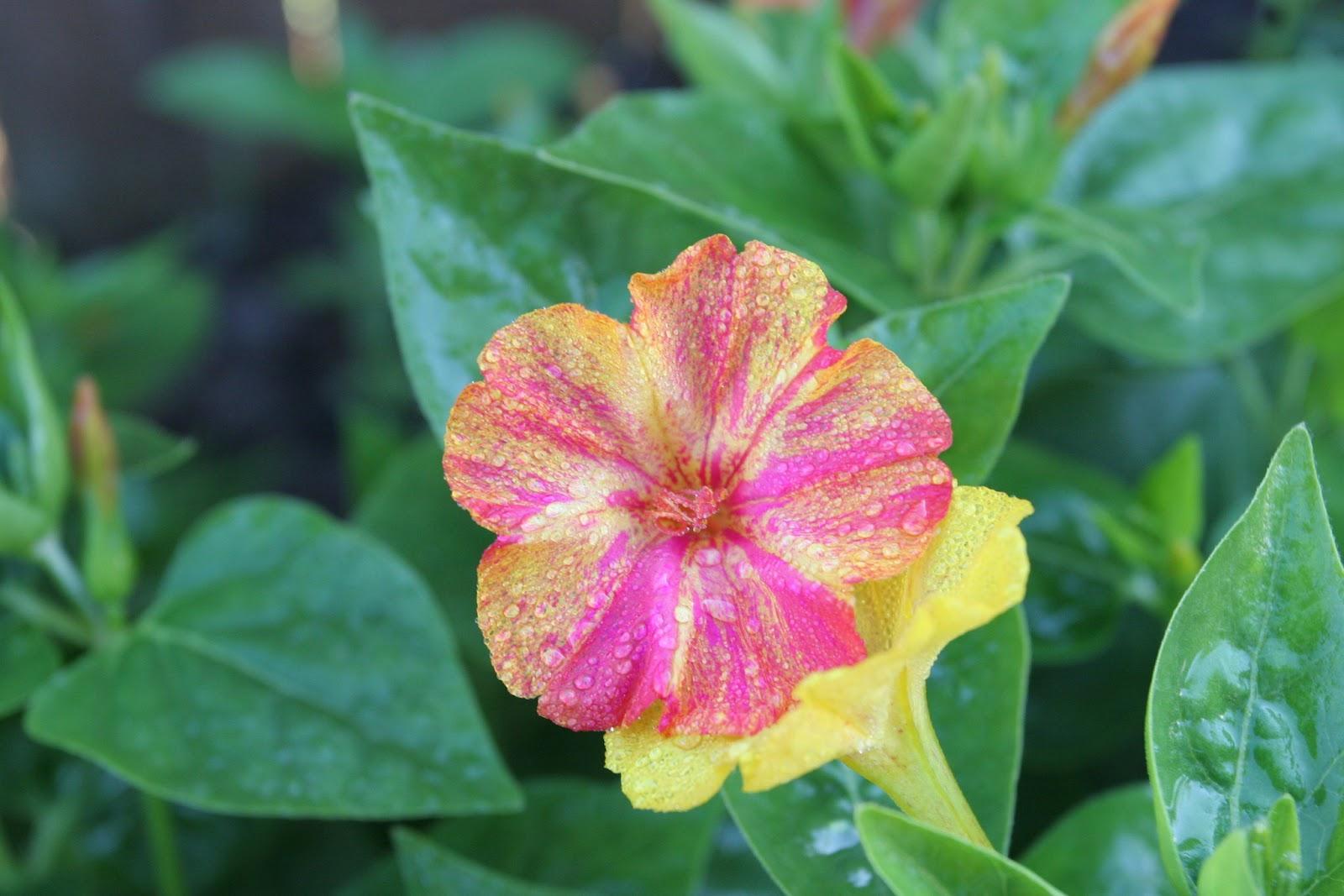 Gardening 2012 - IMG_2948.JPG