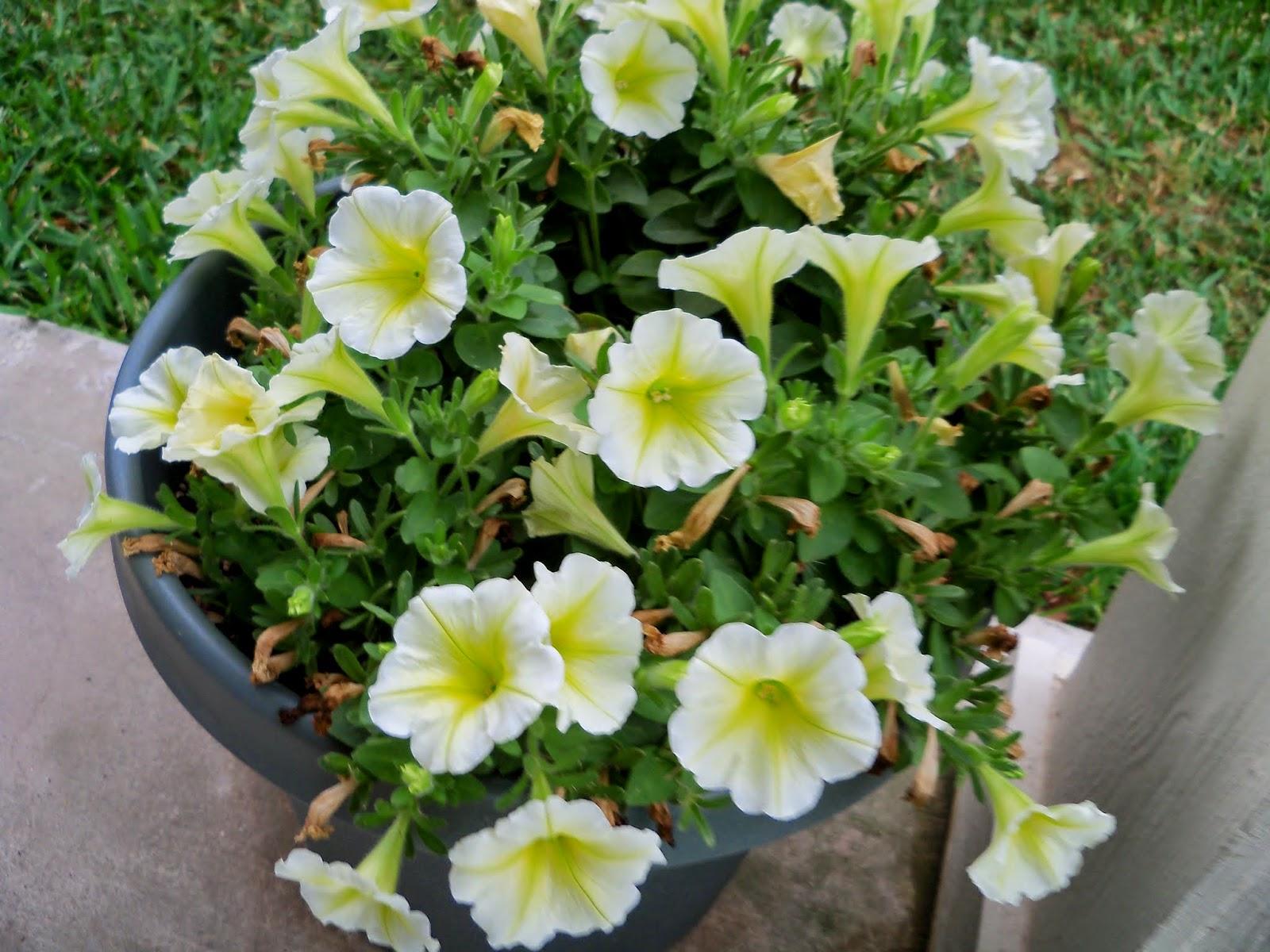 Gardening 2014 - 116_1859.JPG