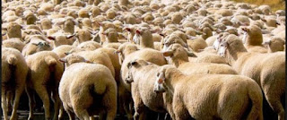 Aid El Adha : Des moutons moins chers ?