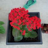 Gardening 2010 - 101_1113.JPG