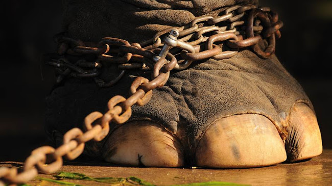 Câu chuyện về con voi