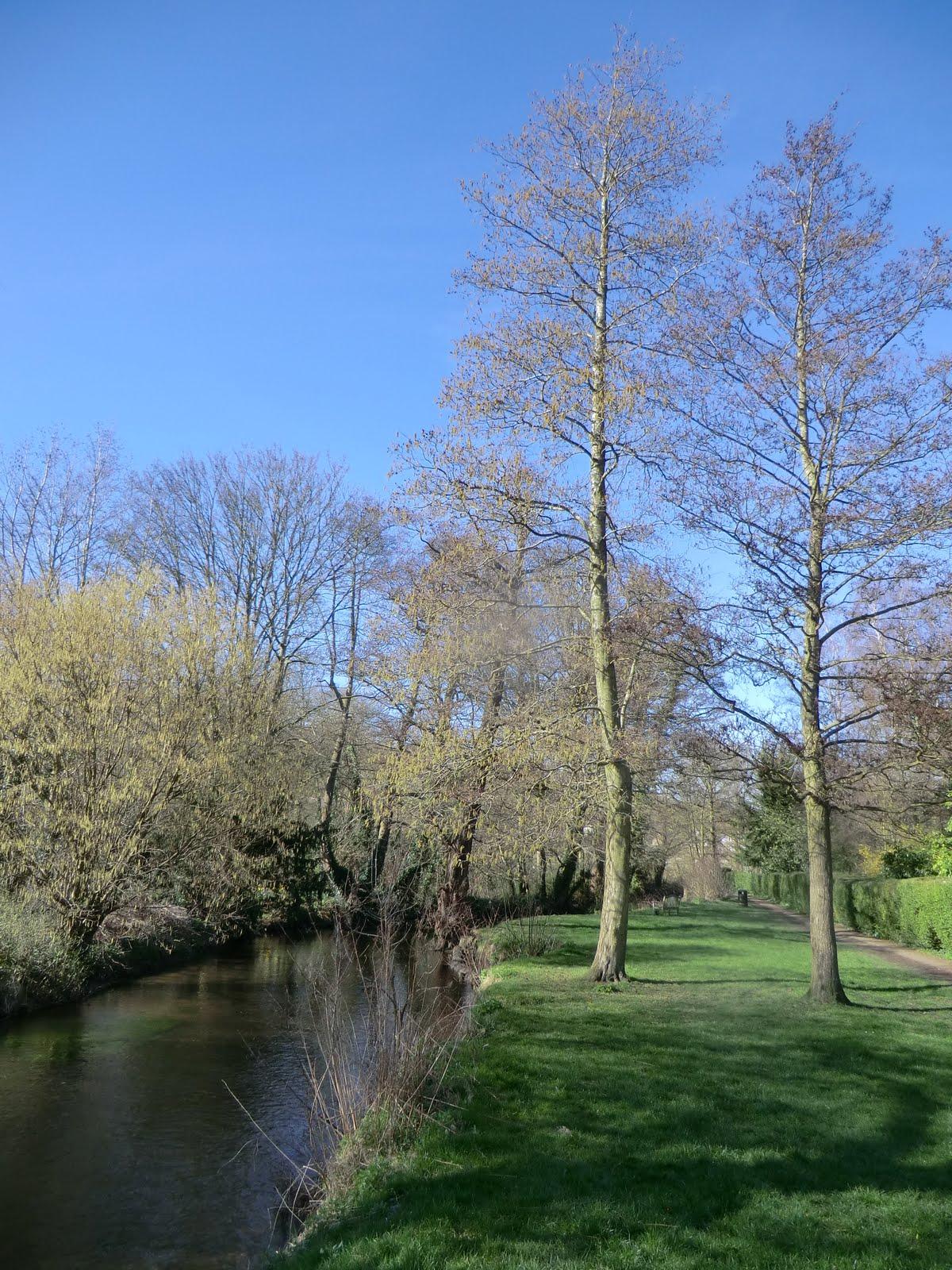 CIMG9108 River Darent in Shoreham