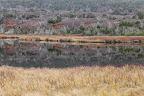 REFLETS CHÉTIFS       Paysage de toundra et de taïga près de Bonavista, Terre Neuve