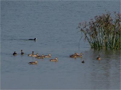 Yelahanka Lake, Nov 2012 (Pic: Dr S. Subramanya)