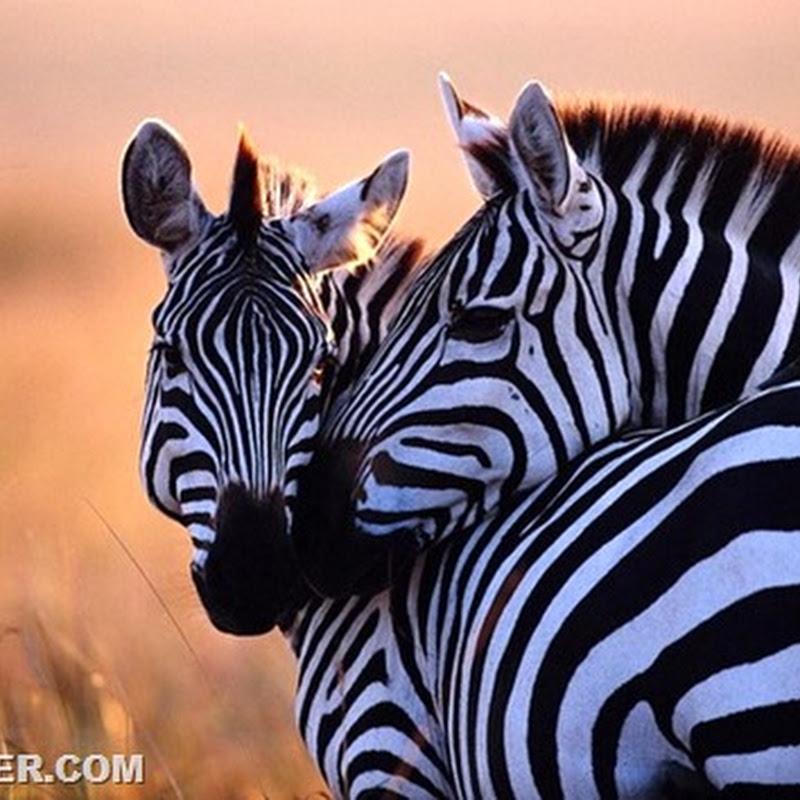 Животные, у которых можно поучиться верности и любви…